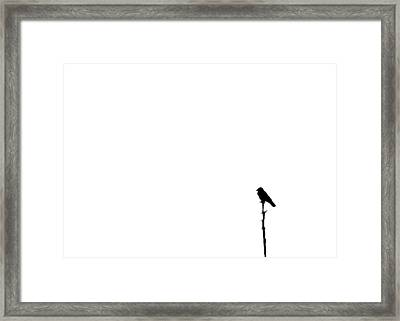 Perched Framed Print by Tom McCarthy