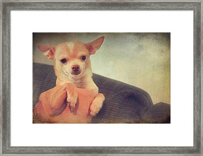 Perched Up High Framed Print by Laurie Search