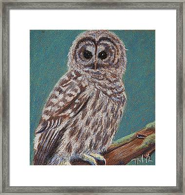 Perching Spotted Owl Framed Print by Thomas Maynard