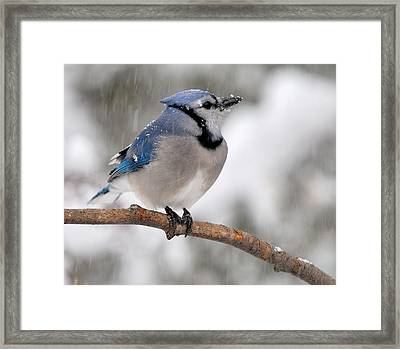 Perching Framed Print by Zannie B