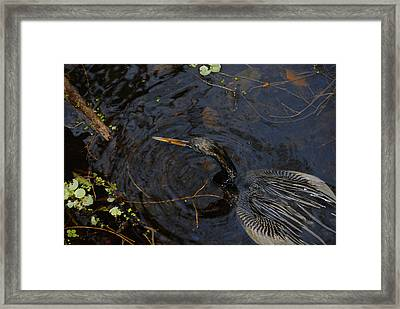 Perfect Catch Framed Print by David Lee Thompson