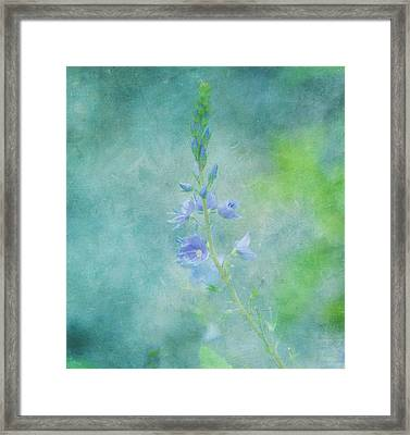 Perfect Dream Framed Print by Kim Hojnacki