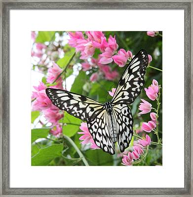 Perfect Landing Framed Print by Becky Lodes