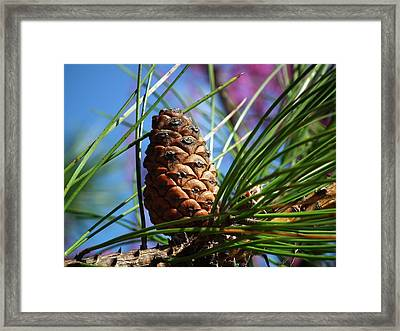 Perfect Pine Framed Print by Linda Koester