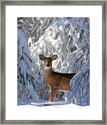 Perfect Pose Framed Print