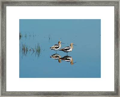 Perfect Reflection Framed Print by Kathy Gibbons