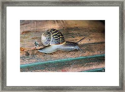 Perfect Specimen Framed Print
