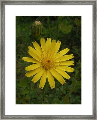 Perfectly Round Framed Print by Cheryl Perin