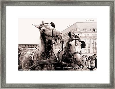 Performing Horses Framed Print by Helge Peters