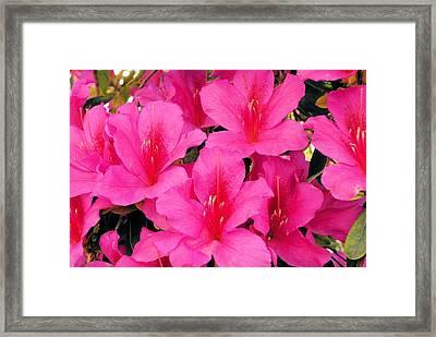 Perfume Framed Print by