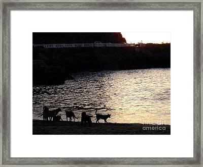 Perros Marinos Framed Print by Karin Cortez