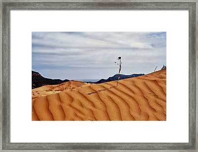 Perseverance Framed Print by Stephen Campbell