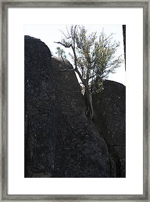 Persevere Framed Print
