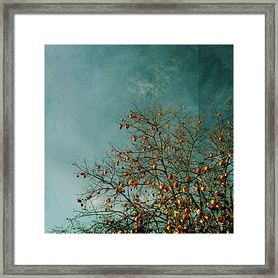 Persimmon B O U N T Y Framed Print by Paul Grand Image