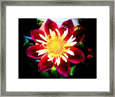 Framed Print featuring the photograph Personally Dahlia by Lisa Brandel