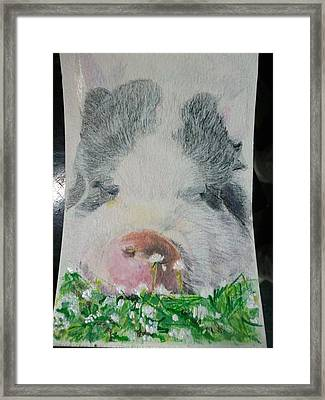 Pet Portrait Original Pig N Meadow Watercolor 4 X 6 Inch U Provide The Picture Or Idea Made To Order Framed Print by Shannon Ivins
