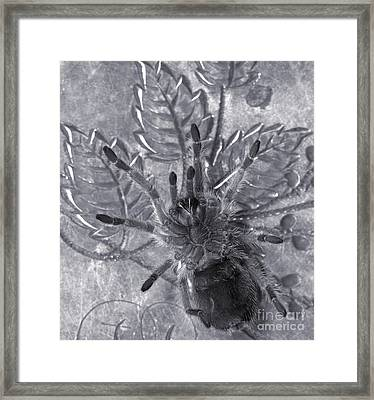 Pet Rose Hair Tarantula On Antique Silverplate Framed Print by Janeen Wassink Searles