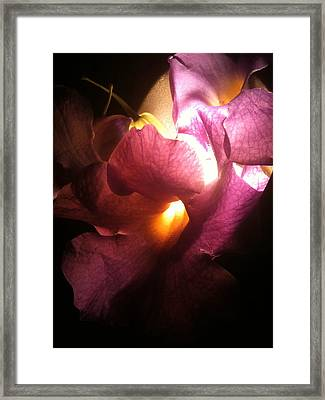 Petal Glow Framed Print by Gail Butters Cohen