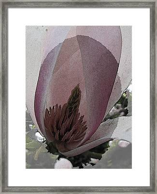 Petal Prose Framed Print by Tim Allen
