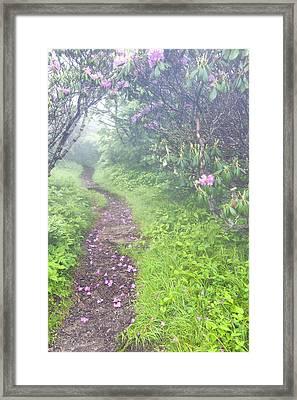 Petaled Path Framed Print by Rob Travis