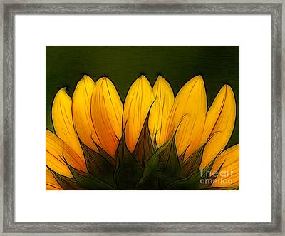 Petales De Soleil - A12 Framed Print by Variance Collections
