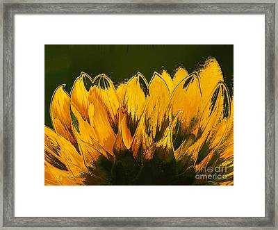 Petales De Soleil - A41b Framed Print by Variance Collections