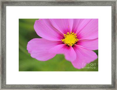 Petaline - P01a Framed Print by Variance Collections