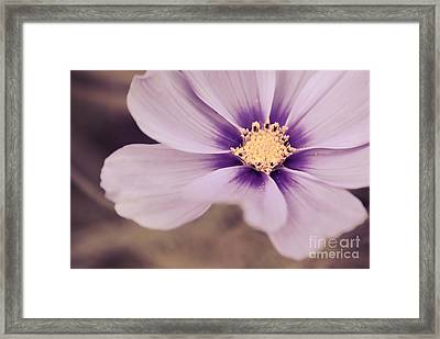 Petaline - P04a Framed Print by Variance Collections