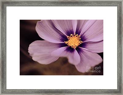 Petaline - P04d Framed Print by Variance Collections