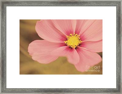 Petaline - P05a Framed Print by Variance Collections