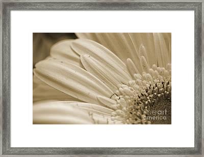 Petals 2 Framed Print