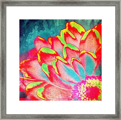 Petals Of Color Framed Print by Cathie Tyler