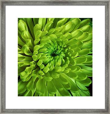 Petals Of Green Framed Print by Bruce Bley