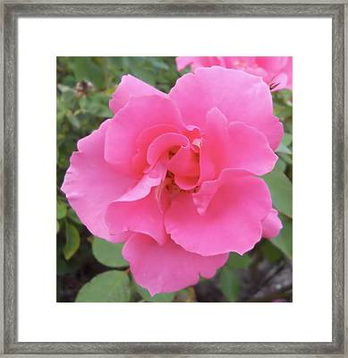 Framed Print featuring the photograph Petals Of Pink by Lynnette Johns