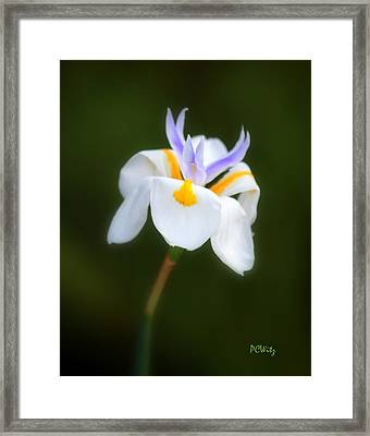 Framed Print featuring the photograph Petite Flower by Patrick Witz