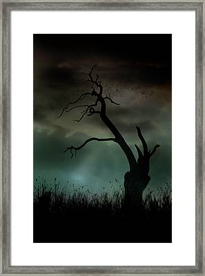 Petrified Framed Print by Richard Piper