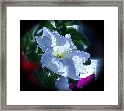 Petunia Vignette Framed Print