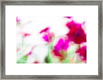 Petunias Framed Print by Nancy Kennedy