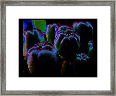 Framed Print featuring the photograph Peyote Mind by Susanne Still