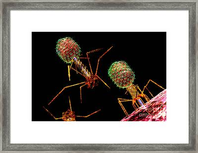 Phage Group Bright 2 Framed Print by Russell Kightley