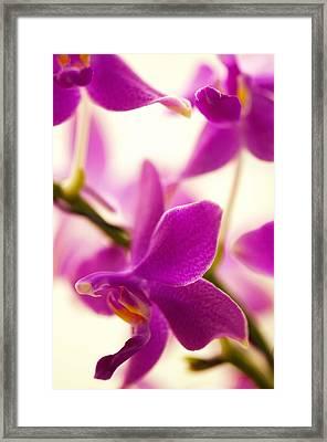 Phalaenopsis Flying Fire 'sweetheart' Framed Print