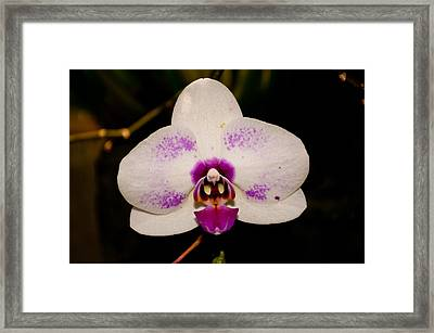 Framed Print featuring the photograph Phalaenopsis White Orchid by Tikvah's Hope