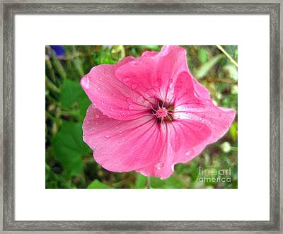 Framed Print featuring the photograph Rain Floral by Kathy Bassett