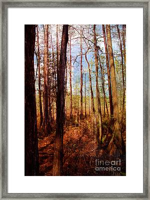 Phil's View Framed Print