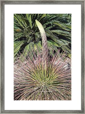 Phoenix Spire Framed Print by Robert Meyers-Lussier