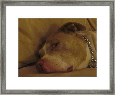 Photo Framed Print by Michelle Funkelmyer