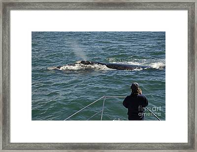 Photographer On Whale Watching Boat Framed Print by Sami Sarkis