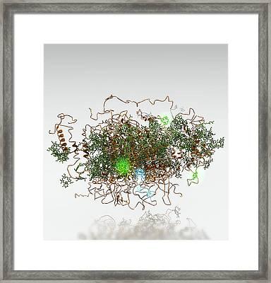 Photosystem I, Molecular Model Framed Print