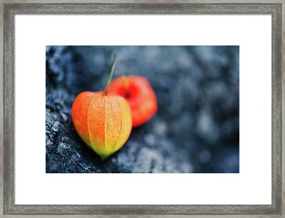 Physalis Alkekengi On Tree Bark Framed Print by Alexandre Fundone