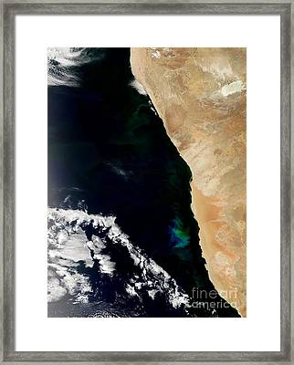 Phytoplankton Bloom Off Nambia Framed Print by Nasa